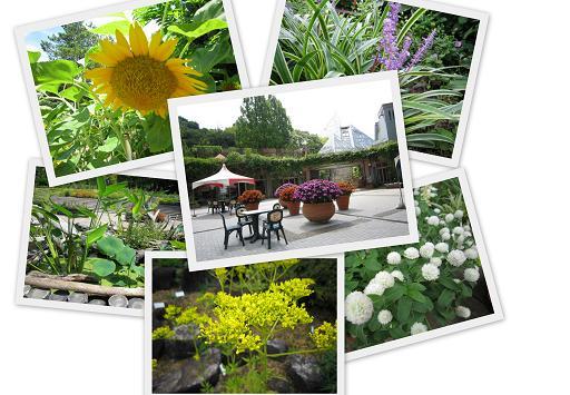 2012_9 花の文化園1 _10.jpg